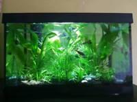 25 litres tropical fish tank