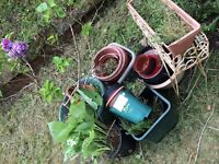 ***FREE*** Plants, Plant pots and a Decerative Stand.