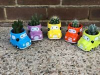 Small novelty cacti, great as a gift and there's a range of 5 colours