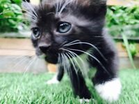 Adorable kittens are looking for a new home!
