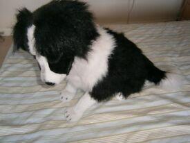 LIFE SIZE DOG - BLACK AND WHITE FUR DOG