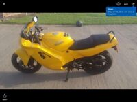 Honda CBR 600 jelly mould