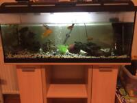160l fish tank with stand