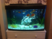 FISH TANK 120l WITH FISHES AND ALL ACCESSORIES!!!