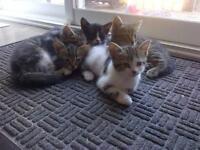 kittens 20$ to a good family
