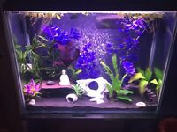 Fish tank and decorations