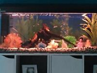 Full 3ft tropical set up with fish