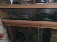 2 corn snakes and 4 ft viv