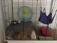 2 female rats