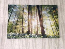 Beautiful Forest Scene Canvas