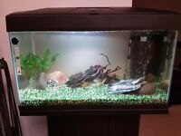 54 litre fish tank with all the fish and equipment only 7 months old