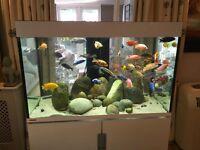 EHEIM tropical fish aquarium