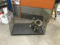 Used dog crate/cage