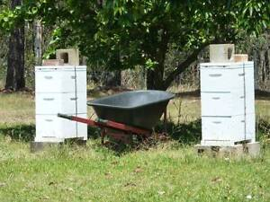 BEE HIVE 3 STOREY WITH BEES Byabarra Port Macquarie City Preview