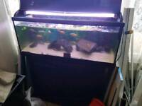 Fish tank 3.5ft for sale