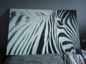 Zebra canvas (ikea)