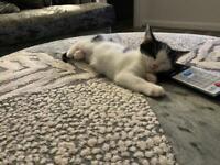 Kitten needs re homing