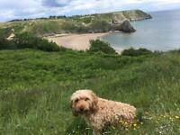 Dog friendly holiday bungalow to let on Gower peninsula