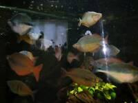 Rainbow tropical fish