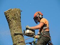 Blake Tree Care - Tree Surgeon
