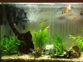 Aquarium with tropical freshwater fish