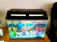 Aquarium with 12 fish, fully equipped for sale