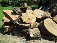 Oak tree firewood
