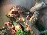 Argus monitor for sale