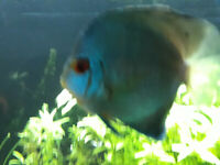 DISCUS FISH & OTHERS
