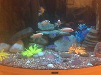 Aquarium/fishtank full setup