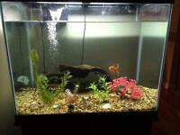 56 Gallon Tank for Sale