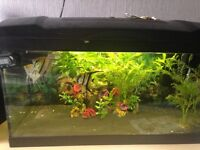 Marina fish tank 54ltr