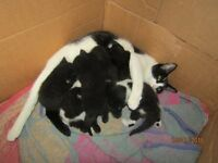 x6 beautiful kittens for sale. ONLY 3 LEFT !!