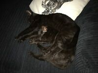 Two 10 month old cats looking for a new home