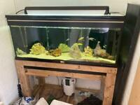 4ft fish tank for sale with fluval 306