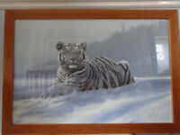 "Framed Snow Tiger picture W26"" x L18"""