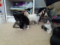 4 beautiful kittens