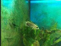 Free Fresh Water Tropical Fish