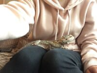 2 year old male bearded dragon called George