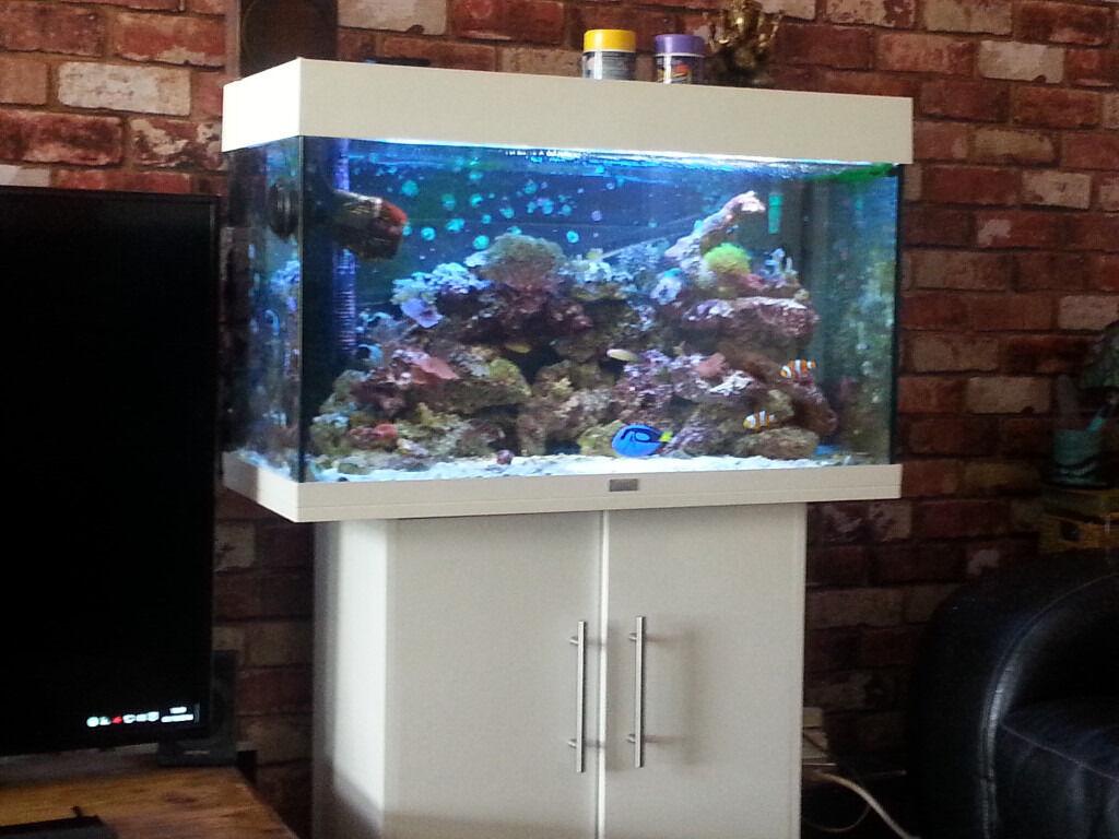 juwel 125 marine reef aquarium in knightswood glasgow gumtree