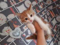 very friendly kittens