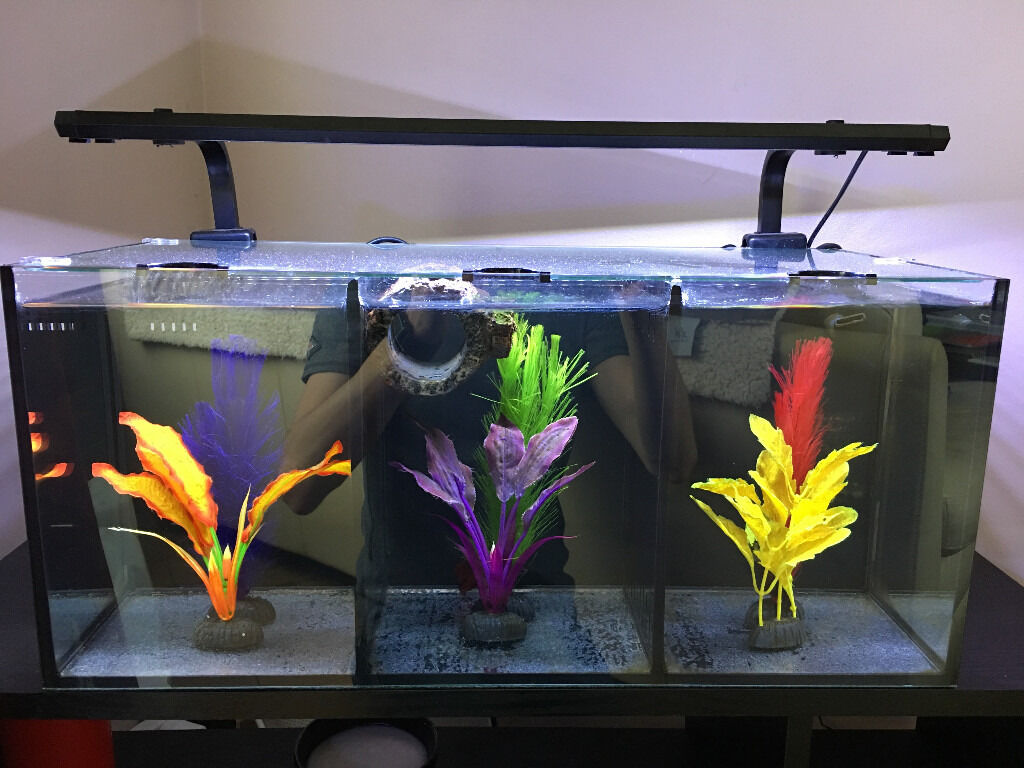 Reduced aqua one betta trio tropical tank with 2 male for Betta fish tanks for sale
