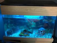 Fish tank with fish for sale