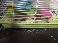 Syrian Hamster with cage and accessories