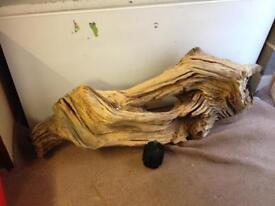 5ft large bogwood