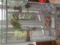 liberta cambridge parrot cage with play top and cover