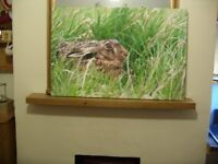 Hare in canvas framed picture