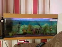 4ft tropical fish tank with everything and fish