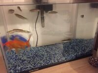 FREE Fish tank + Fishes