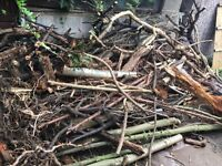 Free Tree Wood from garden clearance